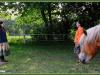 yoga tussen de paarden