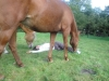 Yoga tussen paarden